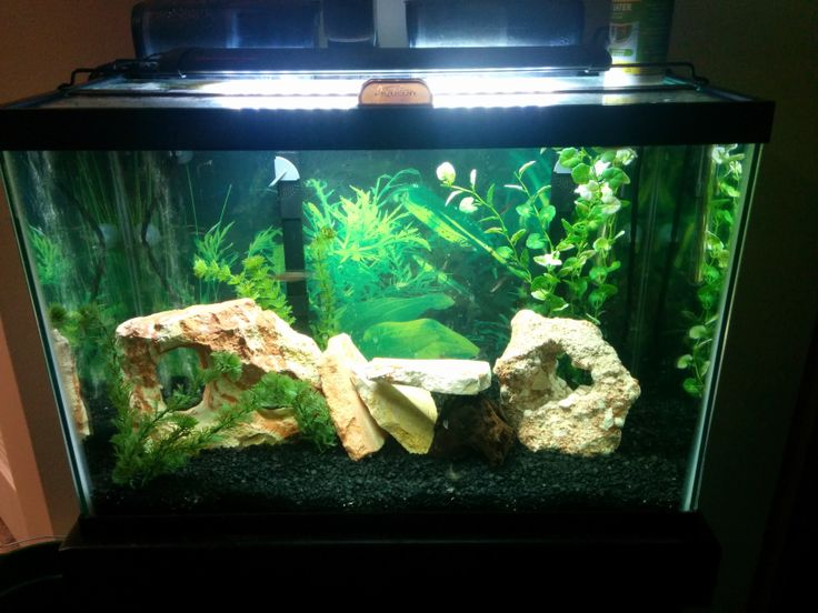 20 gallon tank ideas 20 gallon stocking ideas 2rw9aau for How much does a 20 gallon fish tank weigh