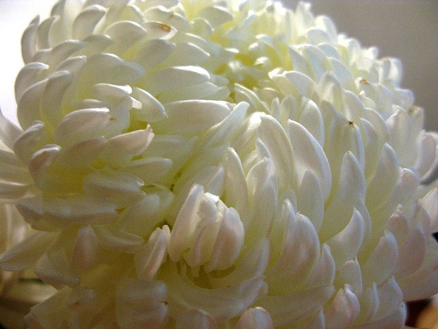 White football mum wedding april pinterest