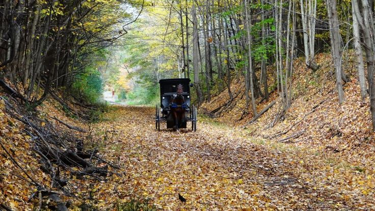 Geauga County is home to the 4th largest Amish population in the world ...