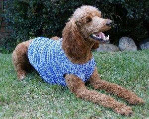 Knitting Pattern For Dog Sweater Beginner : Poppy in a Sweater diy - might have to try! Pinterest