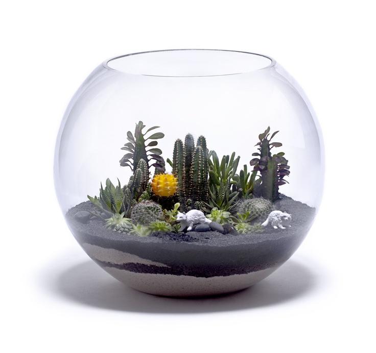 cactus terrarium bowl terr rios estufas pinterest. Black Bedroom Furniture Sets. Home Design Ideas