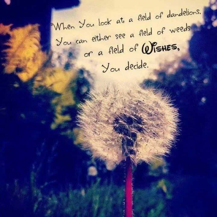 Dandelion Wish Quotes Quotesgram