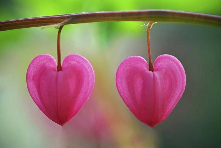 romantic photos for valentine's day