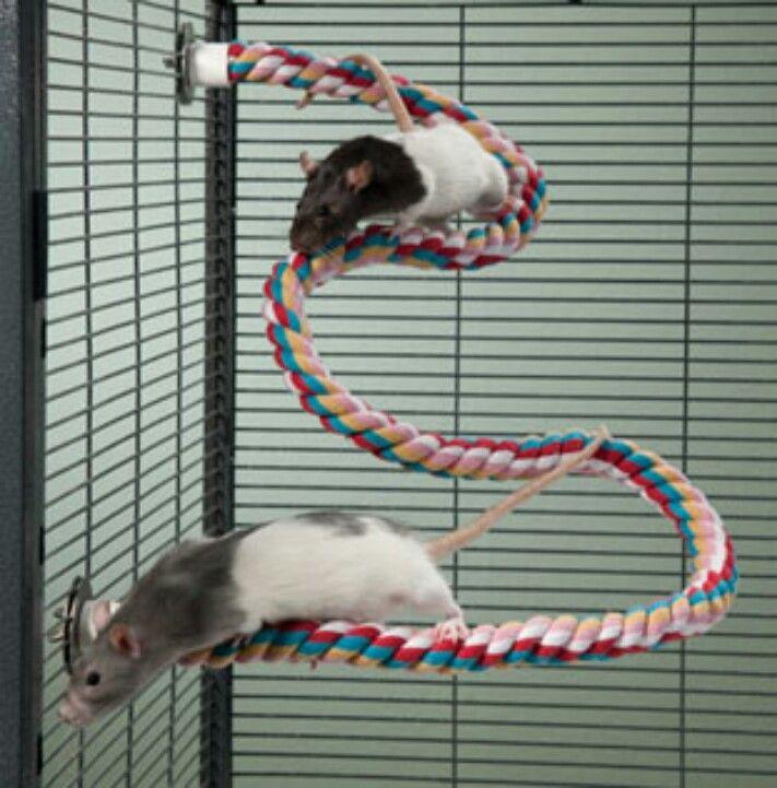Как сделать игрушку для крыс 424