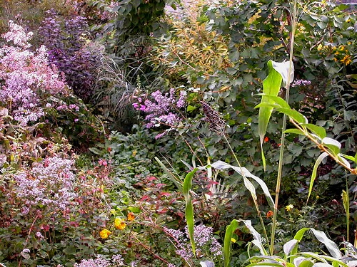 Pollinator Garden Outside Pinterest
