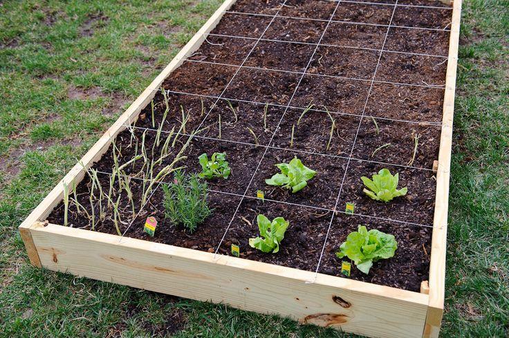 Square Foot Gardening Gardening Pinterest