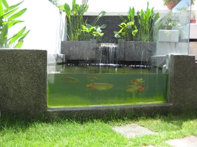 Glass pond interiors patio pinterest for Outdoor fish tank pond