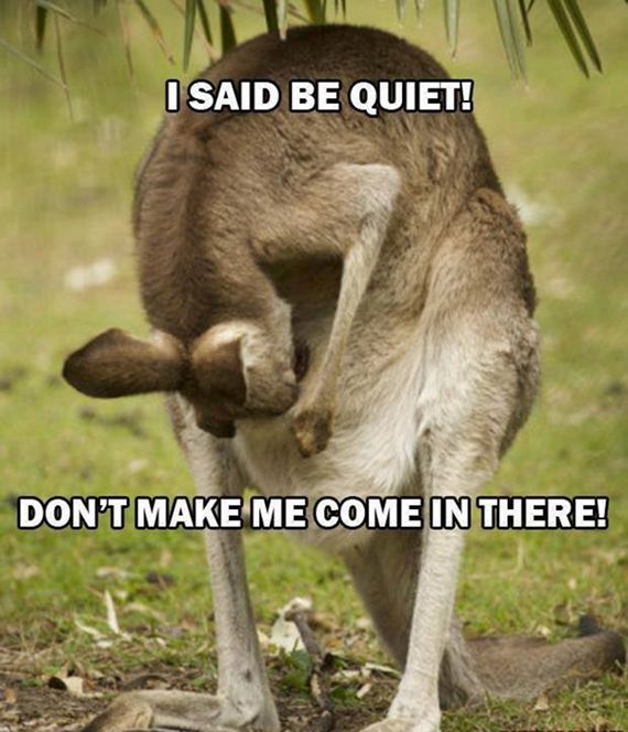 Don't make me come in there #fun #amazing #amazinganimals #kangaroos #awesome #funnyphotos