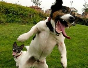 Beware I am ferocious!!!  http://www.happyhealthpro.com/funny-animal-pictures.html