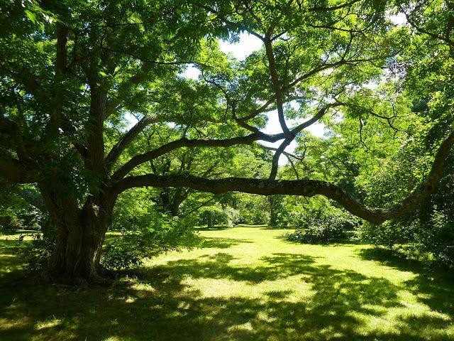 Jamaica plain arboretum wedding