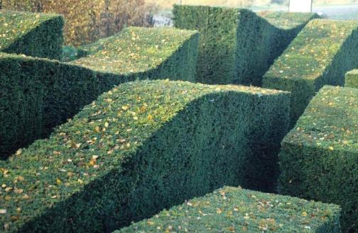 Oudolf_hedges