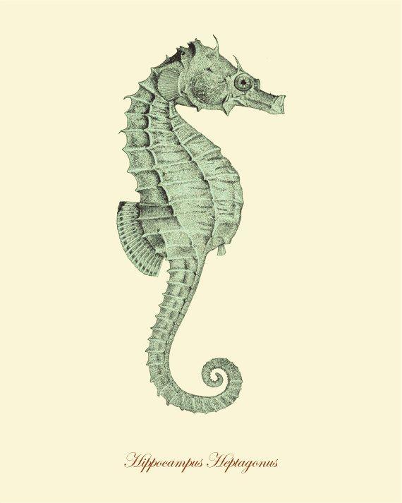 Seahorse Vintage print...