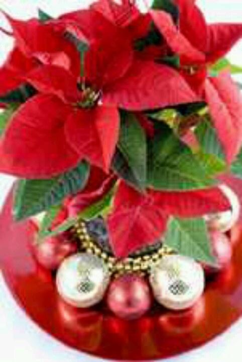 Poinsettia Centerpiece Christmas Pinterest