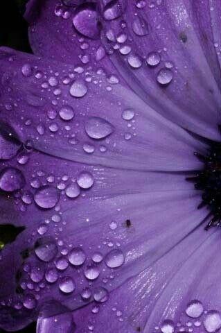 Purple rain drops on flower | Passion for Purple | Pinterest