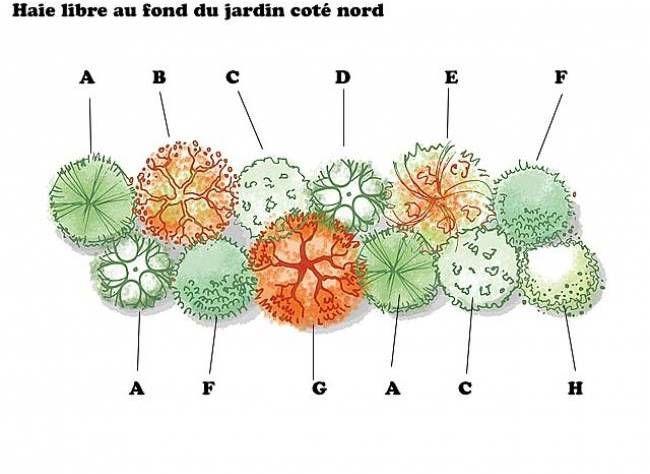 Haie De Troene Jardin : Haie brise vent a pin arbuste � crochets b sorbier des oiseaux c