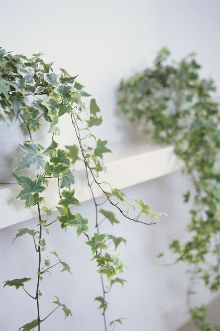 5 Indoor Plants That Are Almost Impossible to Kill images