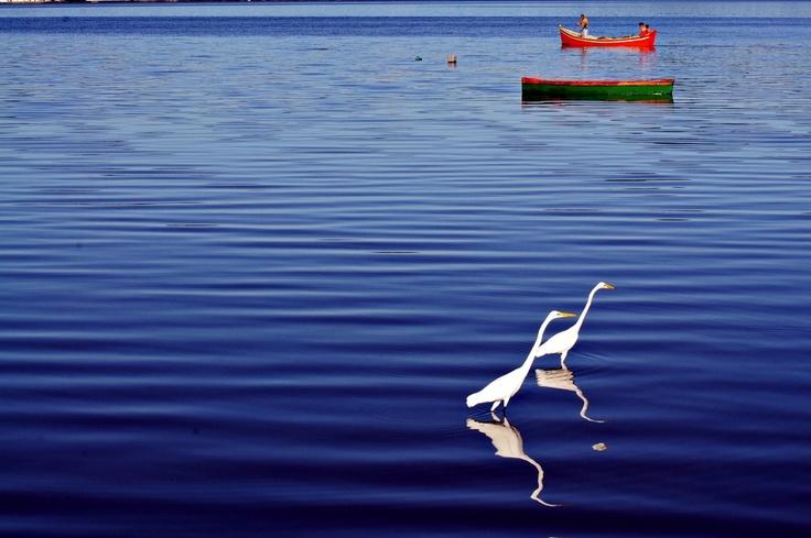 E meus olhos navegam pelo azul de barcos improvaveis rumo ao que ...nem sei!