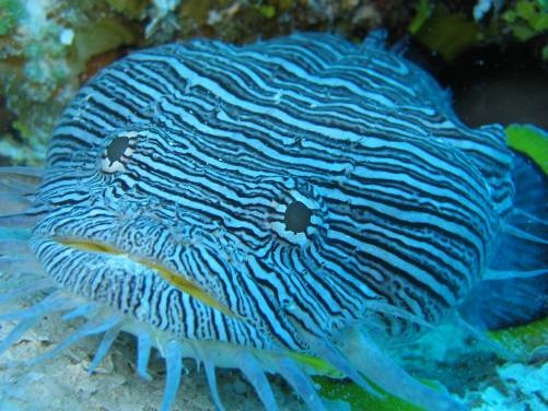 Beautiful And Exotic Exotic Fish Pinterest