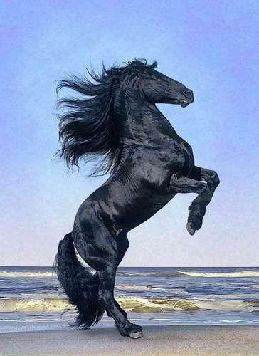 Horse - Magazine cover