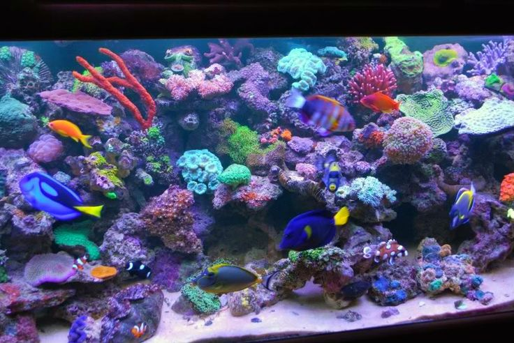 Pin By Brittany On Saltwater Aquarium Ideas Pinterest