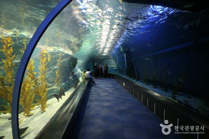 Busan Aquarium Korean pop culture Pinterest