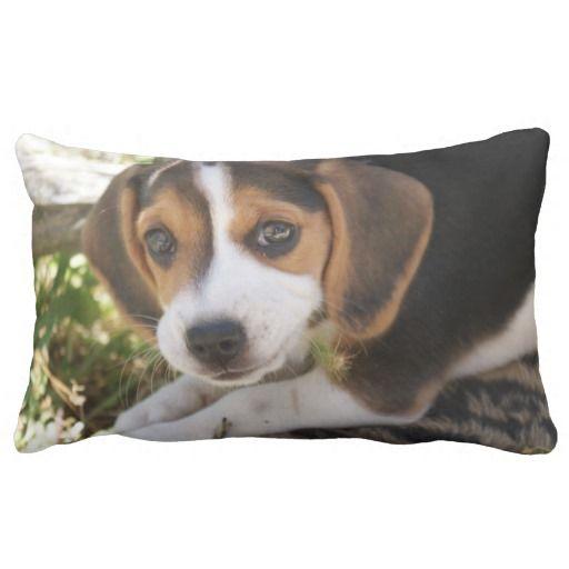 Puppy Dog Beagle Throw Pillows: pinterest.com/pin/220254238000776149