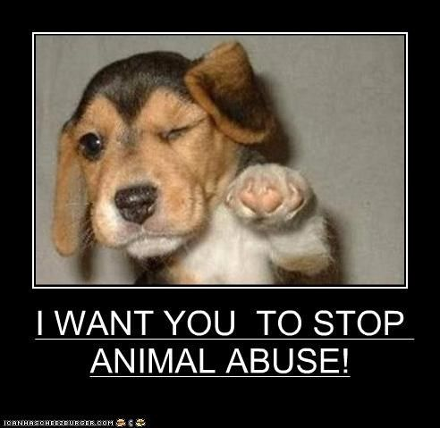 essay on stop cruelty against animals Caitlan said: this is an essay i wrote for english class hope you like it :)   wikipedia states: 'cruelty to animals or animal abuse is the infliction of  be  addressed before the world can progress towards being a better place.