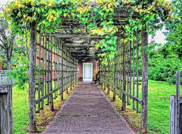 Rustic grape arbor verdant pinterest - Building trellises property ...