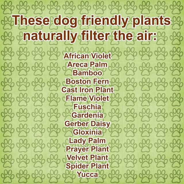 Pin By Charlotte Reed On Create Pet Home Pinterest
