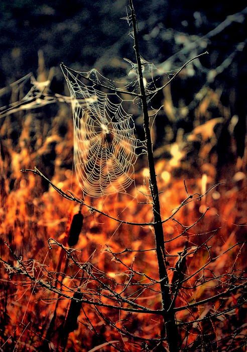 Not that I like the spider part of the season…but it's still beautiful. ;)