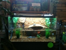 Aquatic turtles TMNT Pinterest