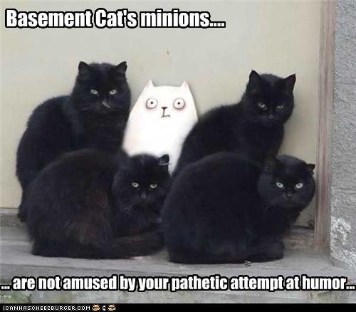 basement cat has minions beware basement cat pinterest