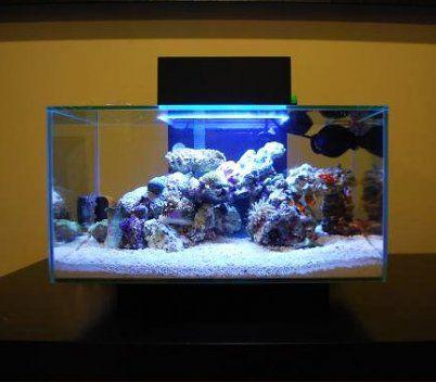 how to setup a saltwater fish tank