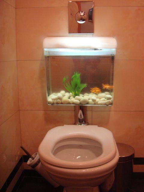 Toilet Tank Fish Unique Tanks Pinterest