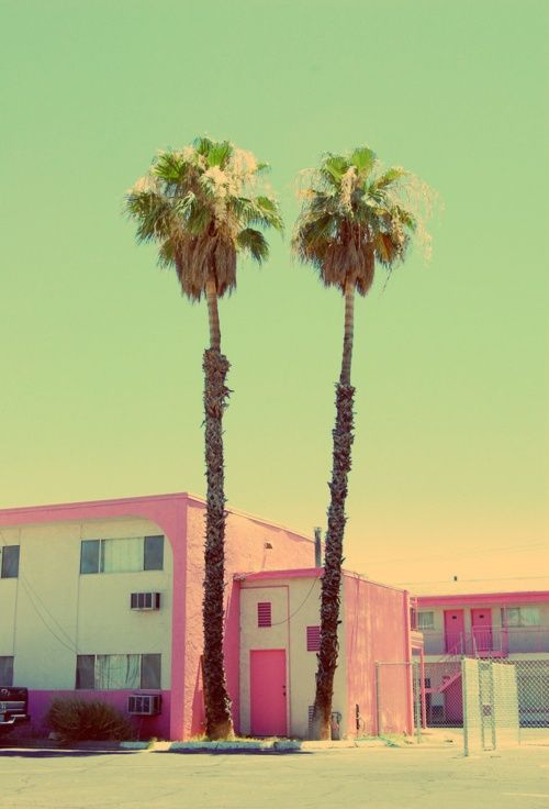 palm, palm tree, keep calm, carry on, california, cali, socal, golden state of mind, gsom, pacsun, urban outfitters, southern cali, southern california, miami, orange county, beach,