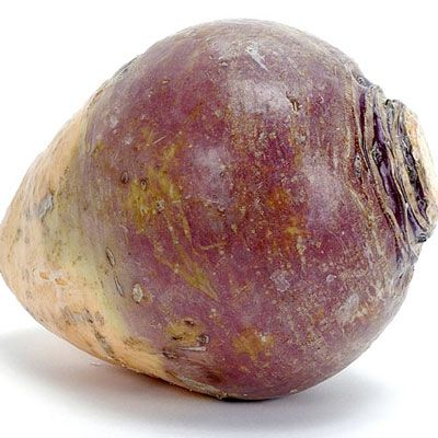 "Mashed Potato-Rutabaga-Turnip Gratin (from Gigi's ""Hudson Valley ..."