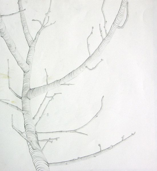 Cross Contour Line Drawing Fruit : Cross contour drawing of tree branch trees pinterest