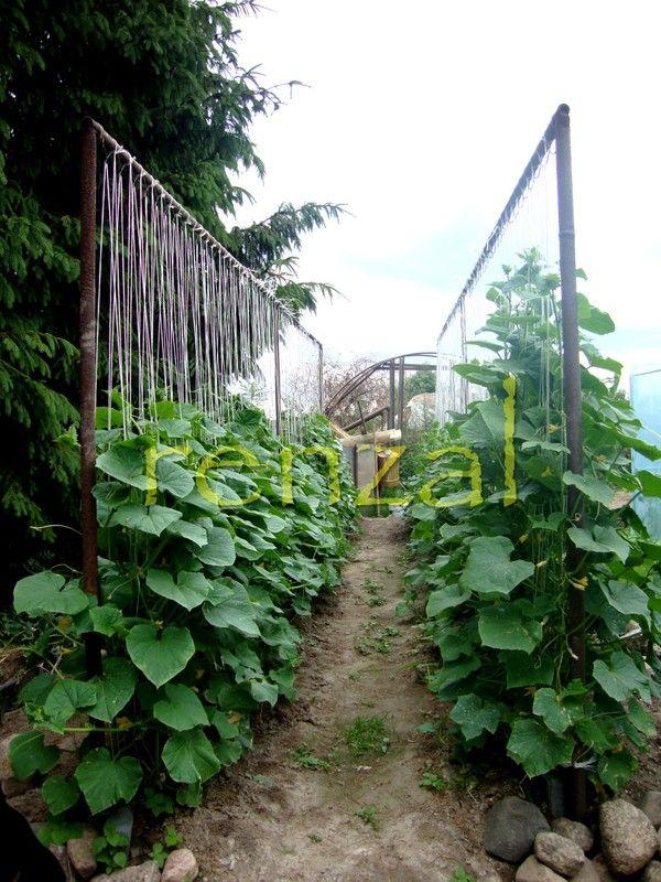Pin by Iwona - Elbridorado on Vegetable Garden   Pinterest