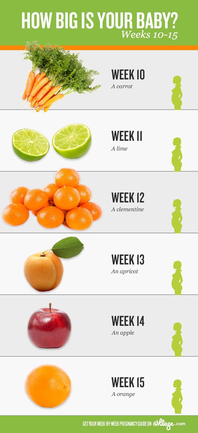 image with Pregnancy Calendar My Pregnancy Week By Week Ivillage