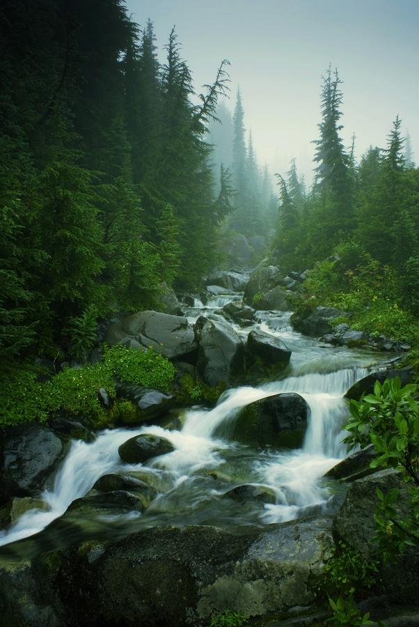 Foggy Creeks and Streams
