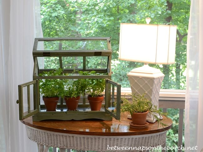 A Tabletop Greenhouse For Growing Herbs