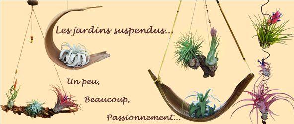 Conseils dEntretien et Culture du Tillandsia, Plante Exotique Sans ...