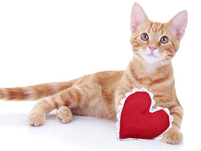 valentine day speed dating edmonton