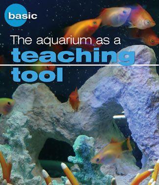 The aquarium as a teaching tool. Teaching Pinterest