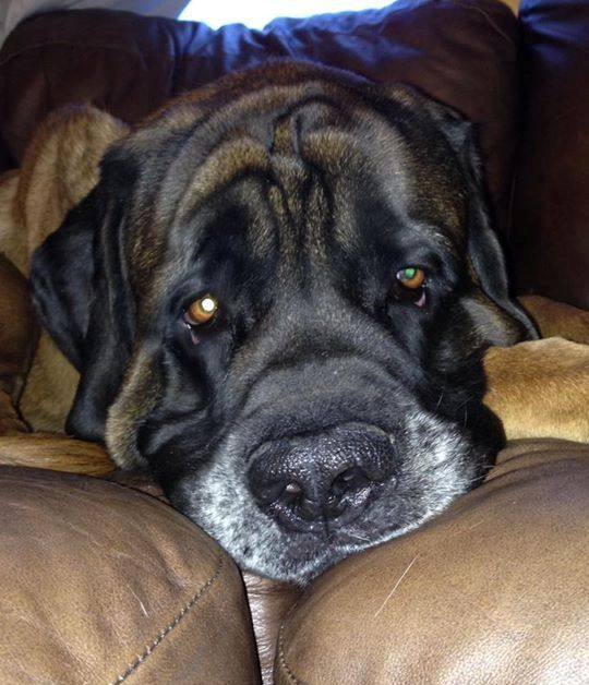 big dogs huge paws inc dog breeds picture