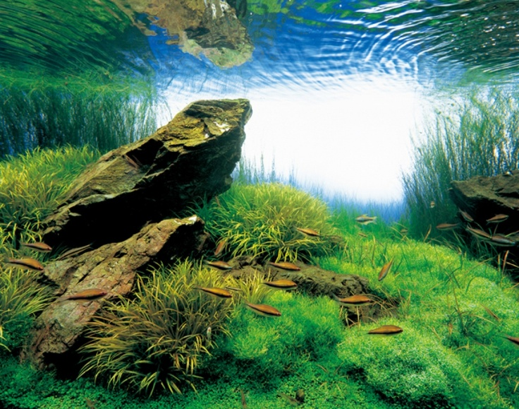 Takashi Amano, the god of aquascaping Aquascaping, my inner nerd ...