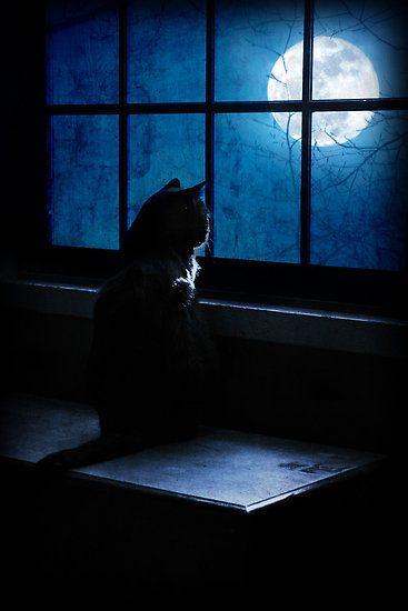 Gato mirando la luna.