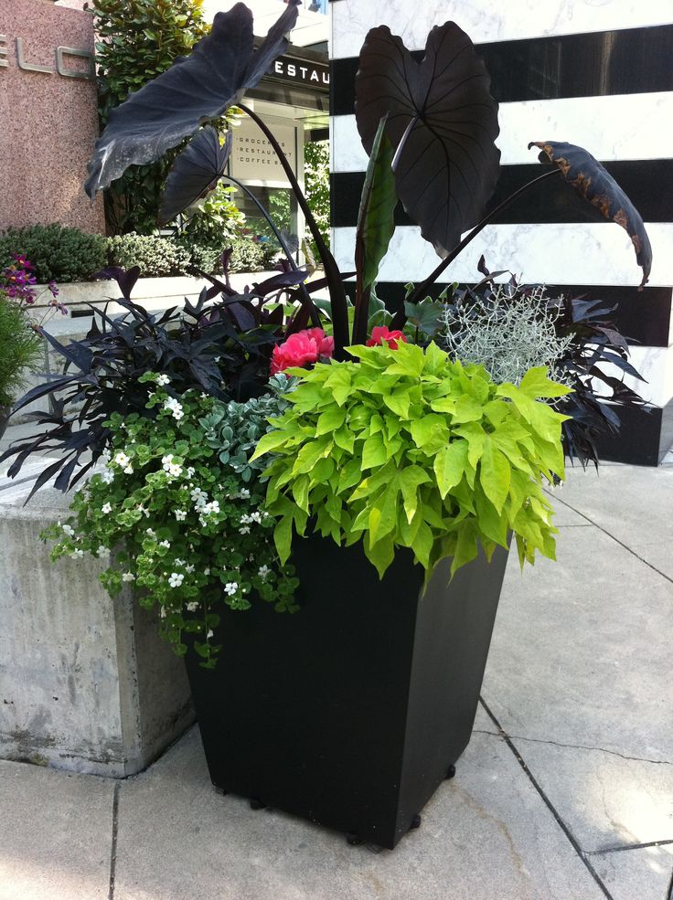 container gardening Pinaholics Chat Room Is Open http://pinaholics ...