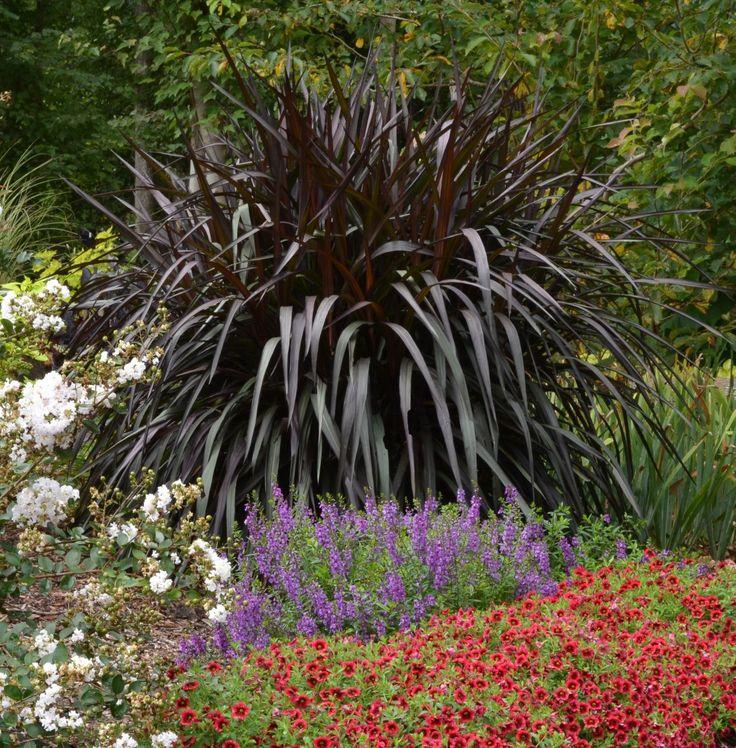 Pennisetum 39 princess caroline 39 planting pinterest for Dark ornamental grasses