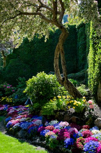 Pink, purple and blue are the perfect combination for a lush green backdrop.